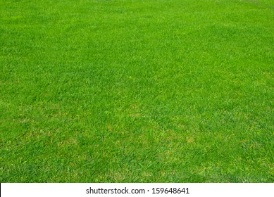 Natural green lawn photographed just after mowing.