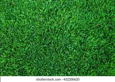 natural green leaf background.