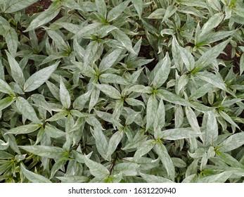 Natural green leaf background texture