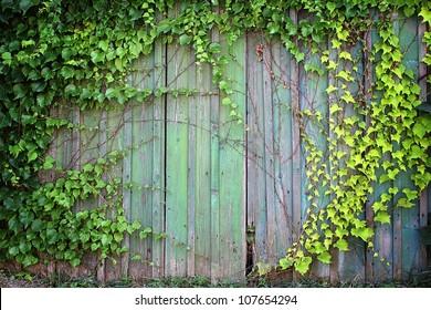 Natural green leaf frame on wooden fence - nature background