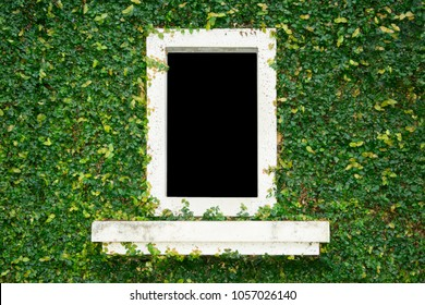 Natural Green Leaf Grass Cover Wall With White Window Background