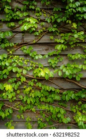 Natural green leaf on wooden wall