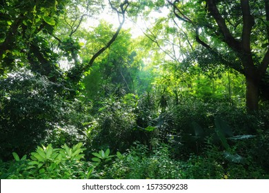 Natural green and leafy forest background
