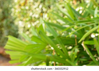 Natural green leaves blur background