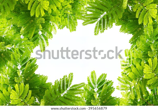 Natural green leaves border and frame on white isolate background, spring or summer ecology concept
