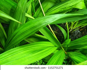 Natural green leaves pattern.