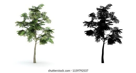 A natural green leaves tree and black alpha mask isolated on white background.