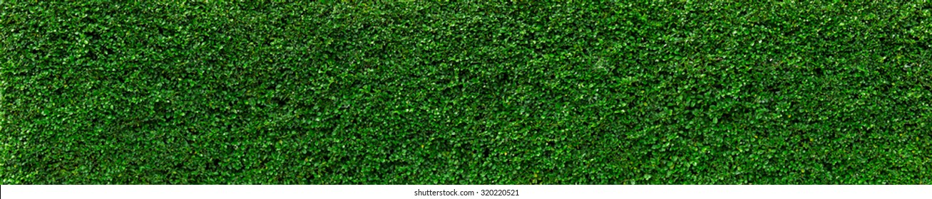 Natural Green leaves wall background, No pattern