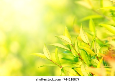 Natural Green leaves Wallpaper,texture,blur background