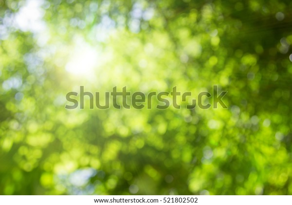 Natural green leaves white background.