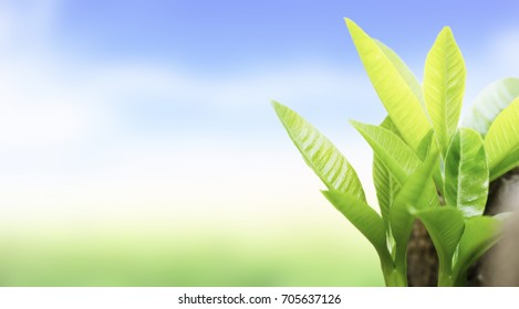 Natural green plants landscape using as a background or wallpaper.
