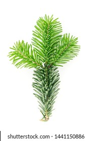 Natural green spruce twig isolated on white background. Lush fir branches or pine twigs sprig texture top view