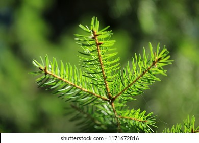 Natural green tree background