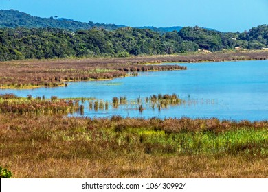 Natural green wetland vegetation against Lake St Lucia and blue skyline at iSimangaliso Wetland Park in Zululand, KwaZulu Natal, South Africa