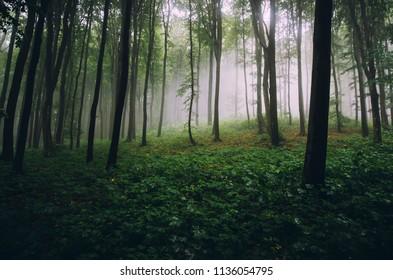 natural green woods wilderness landscape