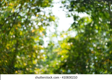Natural greenery bokeh texture and background beautiful summer color.