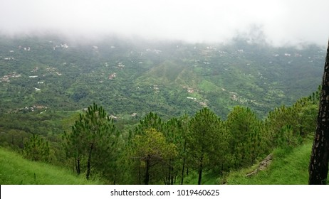 Natural Greenery Of Kasauli