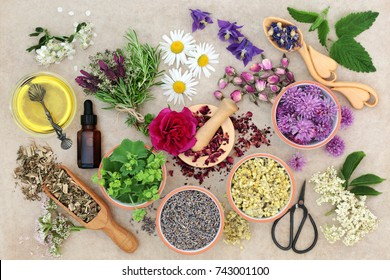 Natural herbal medicine with fresh herbs and flowers, aromatherapy essential oil, mortar with pestle and scissors on hemp paper background. Top view.