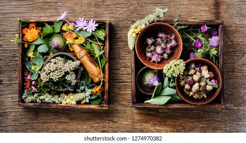Natural herbal medicine with herbs and flowers on rustic wood background