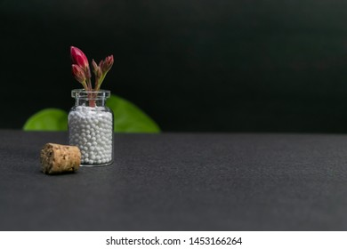 Natural Homeopathy - Flower buds in homeopathy medicine bottle with cork and green leaf on dark background