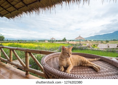 Natural  homestay ,Best Organic Farm Stays in Thailand