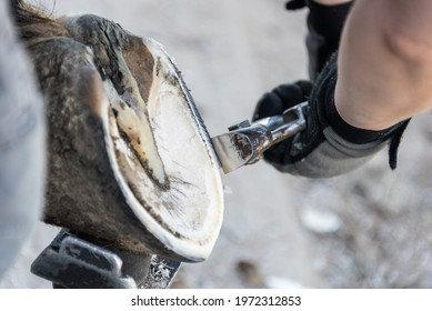 Natural hoof trimming - the farrier trims and shapes a horse's hooves using the knife, hoof nippers file and rasp.