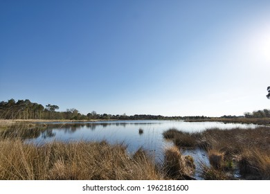 Natural horizontal landscape of national park Kampina in Boxtel, Noord-Brabant on a sunny day in spring. Fens with water, heather and grasses and trees on the horizon with a blue sky. With copy space.