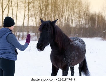 The natural horsemanship, the free relation of a person and a horse is in outdoors. The caucasian horsewomen and her black mare are in a winter field.