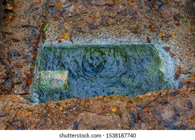 natural hydrogen sulfide source in the forest