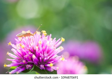 Natural insect on pink flower with green background