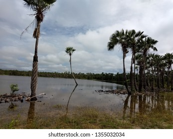 Natural lagoon surrounded by a kind of palm trees