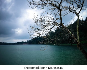 Natural Lake Scenery Tree At The Edge Of The Lake Beratan At Bedugul, Tabanan, Bali, Indonesia