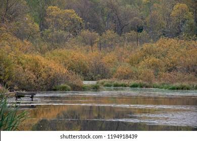 Natural landscape - Autumn rhapsody of paints