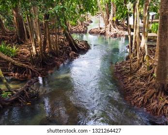 Natural landscape of blue pond among the mangrove of Krabi province, Thailand