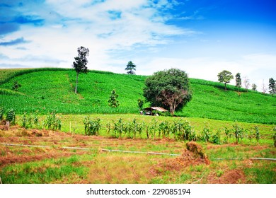 Natural landscape of corn field and rice field on mountain against blue sky