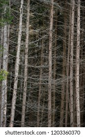 Natural landscape - the dried-up wood