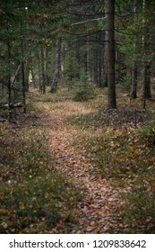 Natural landscape - Fall in the wood situated near Moscow