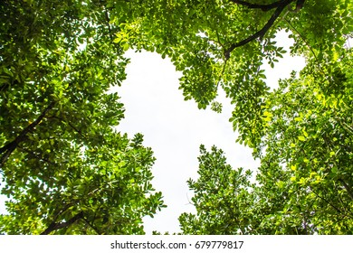 The natural landscape in the forest has branches and green foliage covered. Cool shady