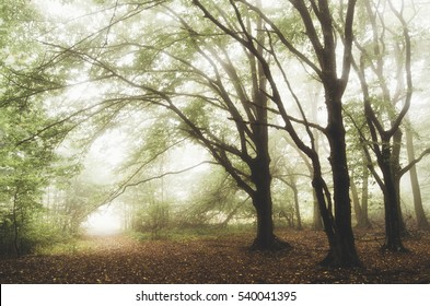 Natural landscape. Green forest with fog, trees, morning light and lush vegetation on rainy summer day