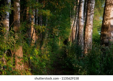 Natural landscape - the nature in sunny day
