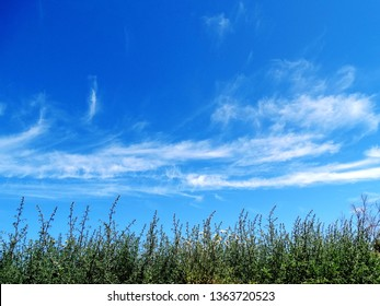 Natural landscape with powder blue sky, white artistry could, and plants.  Travel destination in Santorini, Greece.  Photo in midday.