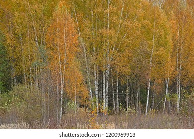 Natural landscape - Pushkin fall in Moscow area