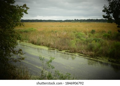 Natural landscape with river flowing through grassy marsh with silhouette of leaves and trees on the horizon