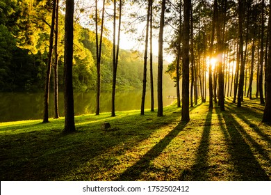 The natural landscape scenery of the lake, yellow-green grass and pine forest is a direct warm-toned sunset light shot. Feel relax and peaceful after outdoor activity on the holiday vacation.