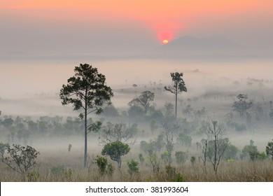 Natural landscape sunrise in winter.