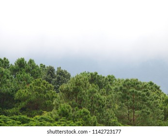 natural landscape with tropical mountain and hills clear bright blue sky on a sunny day in summer surrounded with tropical jungle plants and trees