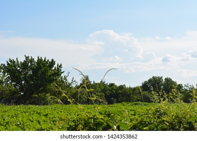 Natural landscape with vegetation and clouds