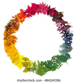 Natural leaves arranged as a colorful circle. Colors of autumn.