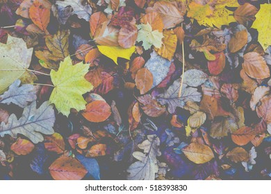 Natural leaves as an autumn background