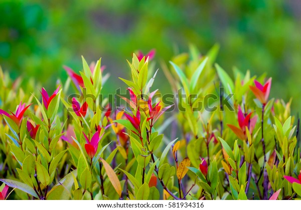 Natural leaves in the garden background
